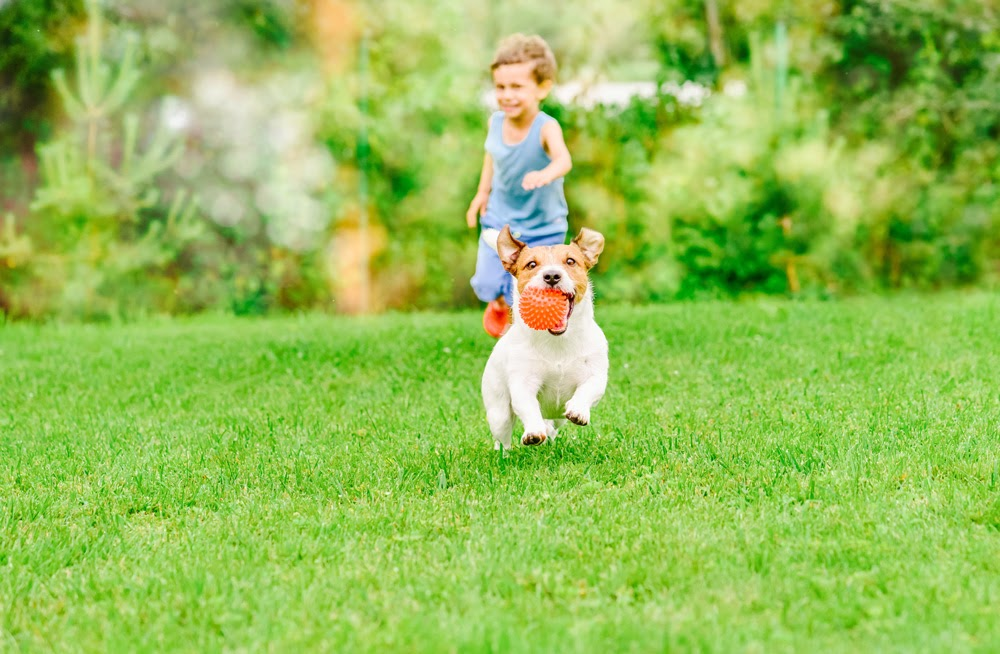 child and dog playing on a lawn